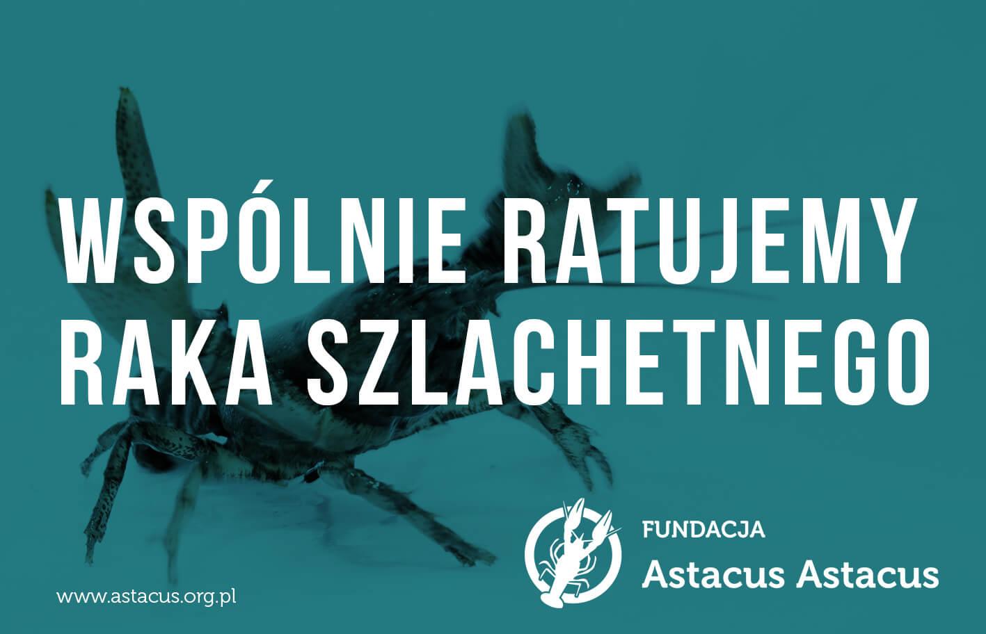 00239 logo fundacja astacus